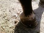 Almond's first shoeing with miscellaneous pictures