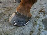 pics of shoeing