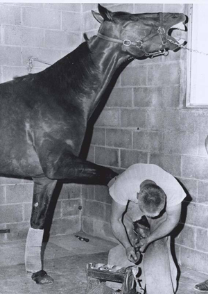 Shoeing at Yonkers in 1966